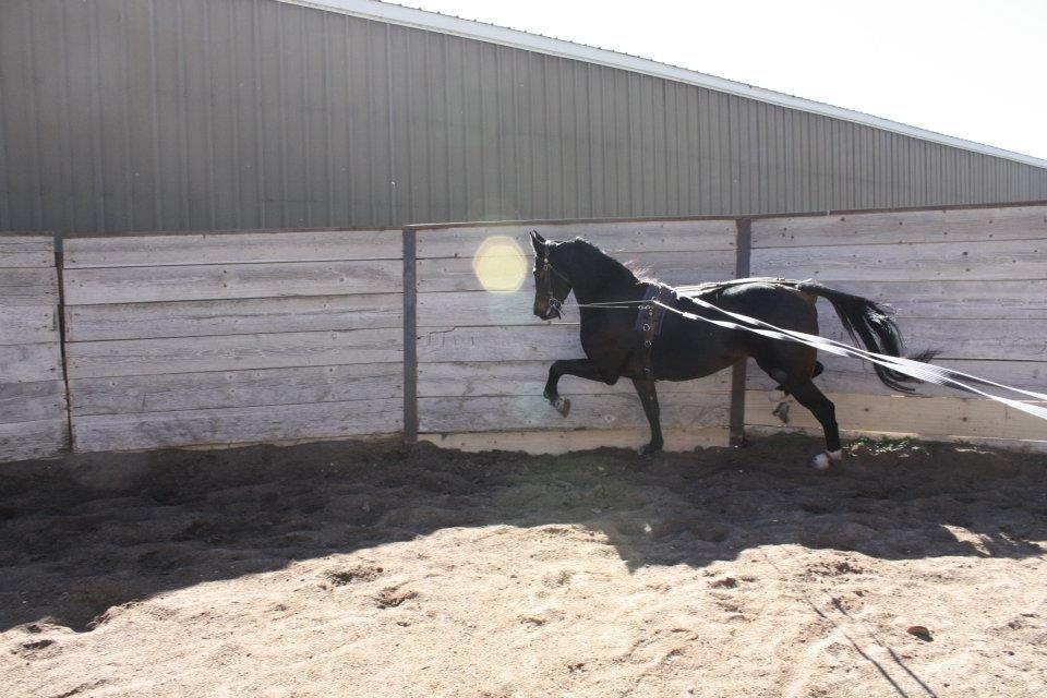 Horse Boarding Option